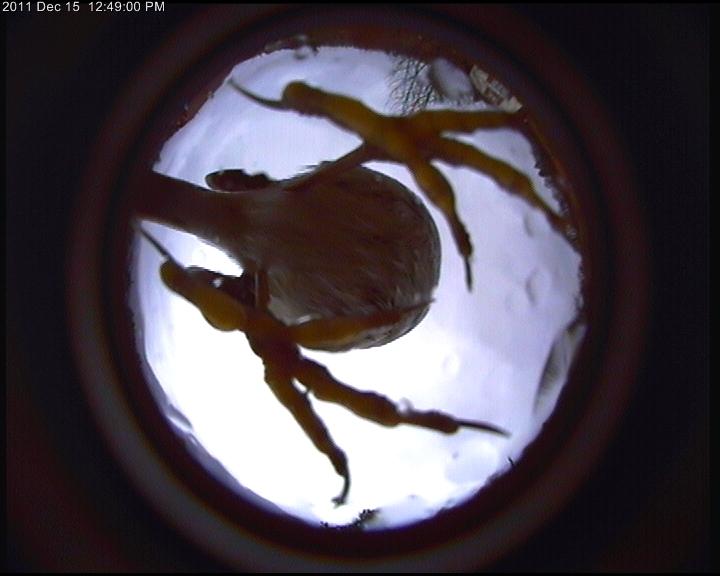 ufobird Oiseau